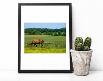 Equestrian Photography, Horse Photography, Farm Photo, Horse Art, Summer Horse, Grazing Horse, Home Decor, Wall Art, Photo by Abby Smith