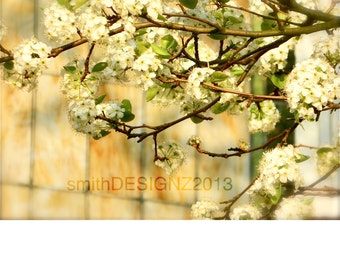 Tree Photography, Stained Glass Photo, Spring Photography, Home Decor, Vinyl Wall Decal, by Abby Smith