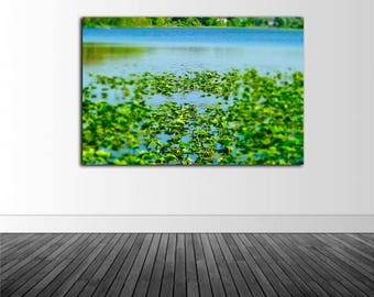 Lilly Pad Wall Decal, Lake Photography, Vinyl Wall Decal, Home Decor, Lake Theme Decor, Infinite Graphics, Photo by Abby Smith, Lilly Pads