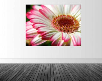 Floral Wall Mural, Vinyl Wall Decal,  Removable Graphics, Pink Tipped Daisy, Photography, Nature Print, Home Wall Decor, Infinite Graphics