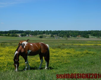 Horse Photography, Equestrian Photography, Show Horse Photo, Landscape Photography, Farm Photo, Home Decor, by Abby Smith