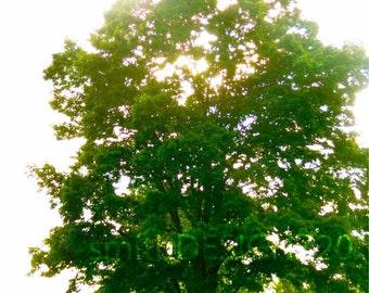 Tree Photography, Summer Tree Photo, Landscape Photo, Green Trees, Home Decor, Tree Wall Art, by Abby Smith