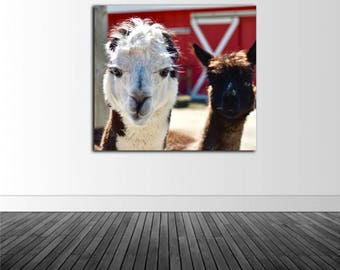 Farm Decor, Lama Photo, Animal Photography, Vinyl Wall Decal, Vinyl Graphics, Infinite Graphics, Photo by Abby Smith, Macro Photography, Art