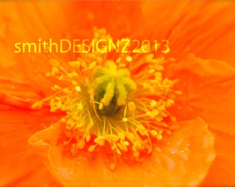 Floral Photography, Poppy Photography, Poppy Flowers,  Nature Photography, Home Decor, Macro Flower Photo, by Abby Smith