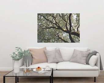 Tree Wall Decal, Tree Canopy, Nature Scape, Serene Tree Decal, Tree Branches, Photo Decal, Home Decor, Wall Art, Trees, Tree Canopy Decal