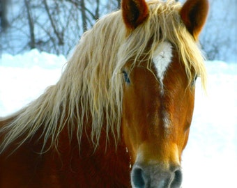 Horse Photography, Winter Farm Scene, Horse Decor, Vinyl Wall Decal, by Abby Smith