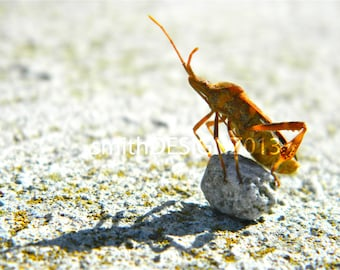 Insect Photography, Bug Photo, Macro Photography, Vinyl Wall Decal, by Abby Smith