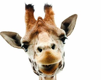 Giraffe Wall Decal, Zoo Animal Decal, Giraffe Photography, Vinyl Wall Decal, Giraffe Head Decal, Giraffe Home Decor, Nursery Giraffe, Decals
