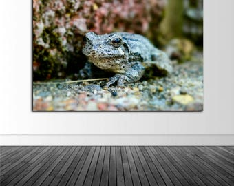 Toad Wall Decal, Nature Wall Decal, Nature Photography, Vinyl Wall Graphics, Infinite Graphics, Photo by Abby Smith, Home Decor,  Photo Art