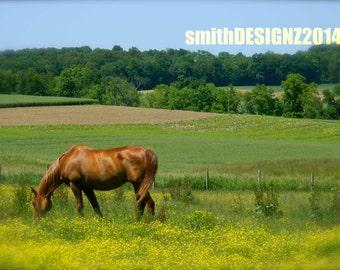 Equestrian Photography, Horse Photography, Farm Photo, Show Horse Photo, Summer Horse, Grazing Horse,Home Decor, Wall Art, by Abby Smith