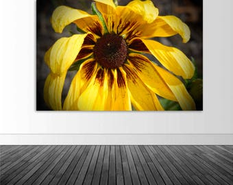 Sunflower Wall Mural, Vinyl Wall Decal, Floral Photography, Photo by Abby Smith, Wall Art Home Decor, Sunflower Decor, Infinite Graphics