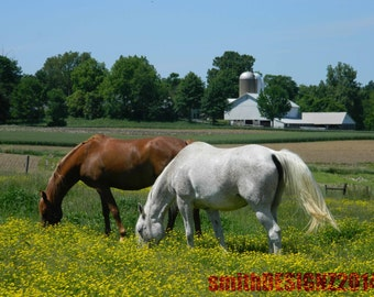 Equestrian Photography, Horse Photography, Horse Decor, Home Decor, Show Horses, Grazing Horses, by Abby Smith