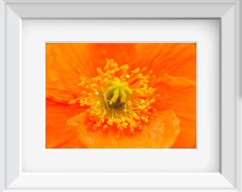 Floral Photography, Poppy Photography, Poppy Flowers, Burnt Orange Floral, Home Decor, Macro Flower Photo, Photo by Abby Smith, Unframed Art