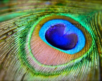 Peacock Decal, Peacock Photography, Wall Art, Home Decor, Peacock Feather Decal, Macro Photography, by Abby Smith, Nature Print, Peacock Art
