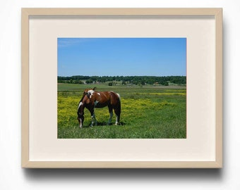 Horse Photography, Equestrian Photography,Landscape Photography, Farm Photo, Home Decor, Photo by Abby Smith, Unframed Photography, Horses