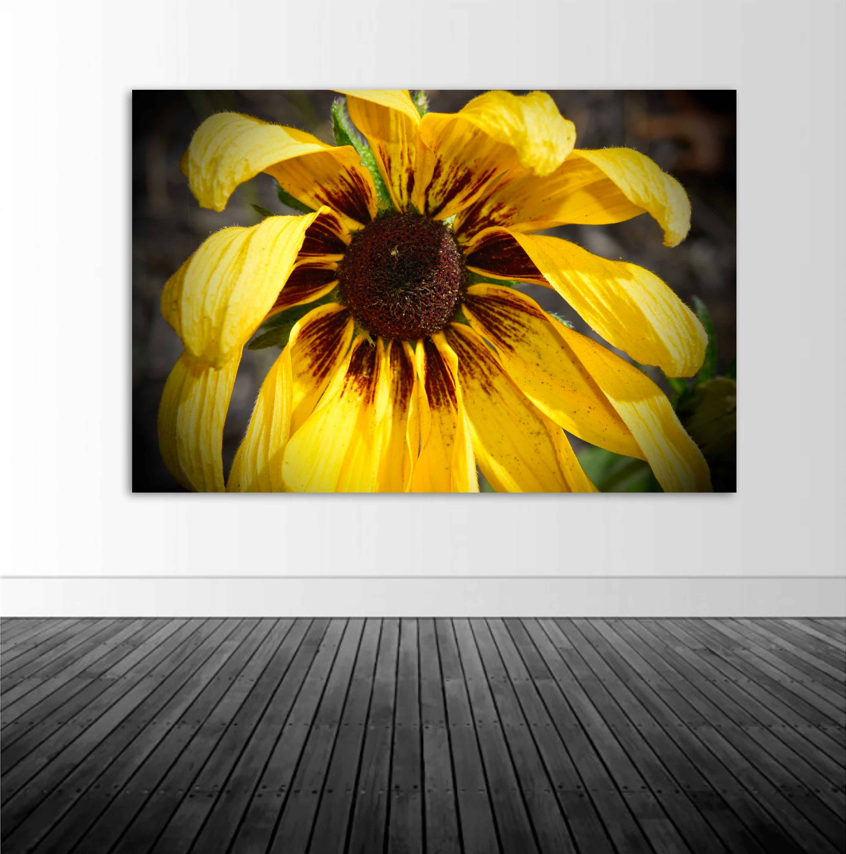 Sunflower Wall Mural, Vinyl Wall Decal, Floral Photography, Photo by ...