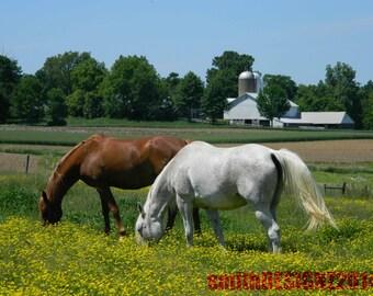 Horse Photography, Equestrian Photography, Farm Photography, Horse Decor, Home Decor, Show Horses, Grazing Horses, Photo by Abby Smith, Art