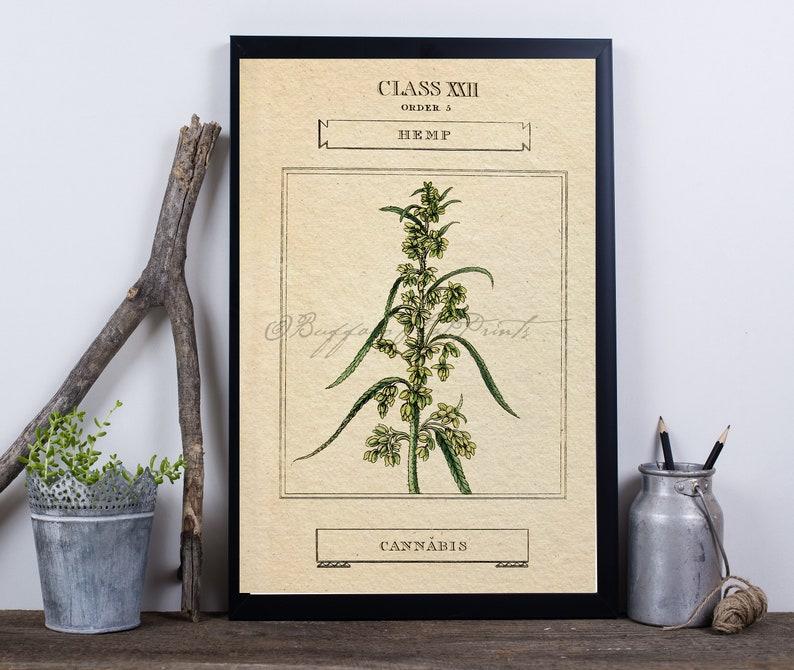 Art Print Marijuana Cannabis Sativa  Botanical Poster Print 6x9 to 24x36