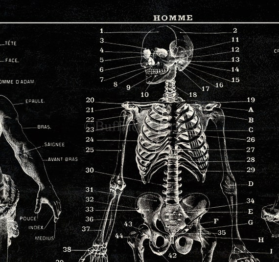 Creepy Halloween Skeleton Anatomy Medical Chart Painting Real Canvas Art Print