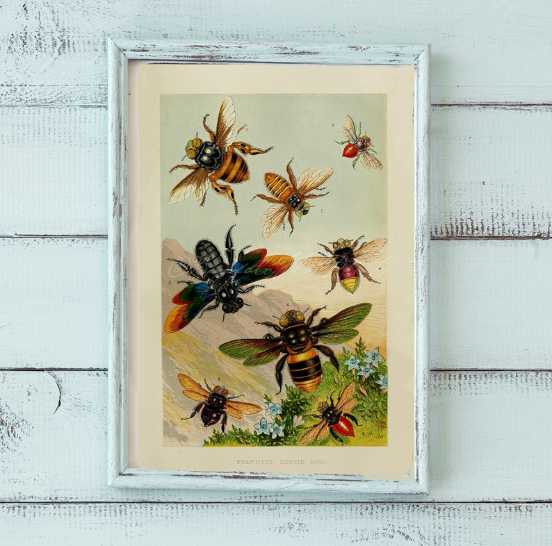 Apiary Honey Bees Insects Making Honey Skep Hive Poster Print Larousse