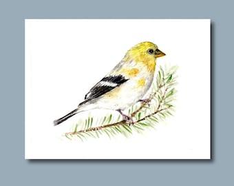 Gold Yellow Finch Bird - Original Watercolor Painting - 5''x7'' bird art 5x7 new years Christmas winter holidays spruce pine winter cards