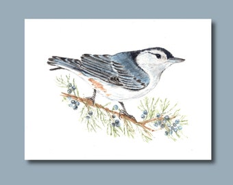 Cute Nuthatch- Art Print of Original Watercolor Painting - new years Christmas winter holidays spruce pine bird new years