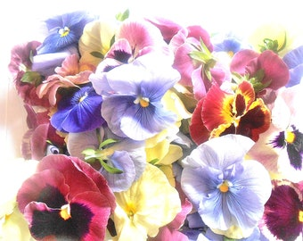 EDIBLE FLOWERS PANSIES Soft Color Collection Fresh or Candied, Edible, Salads, Baking, Drink Toppers, Cupcake Toppers, Cake Decorations 35