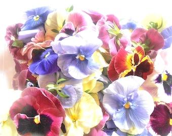 Edible Fresh Flowers