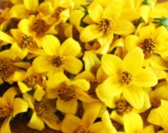 EDIBLE SUN DAISY Fresh Flowers Blossoms Fresh, Candied Bright Clean  Yellow, Flowers, Bulk, Salads, Wedding Cakes, Mild Versatile