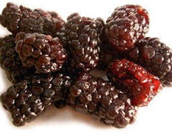 30  FRUIT NUT BARS Sugar Free, 27 Varieties Blackberry Bars, Gluten Free, Vegan, Diet Bars, Acai Berry, Brindle Berry,