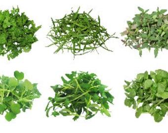 Micro Green Herb Assortment: Micro Arugula, Micro Basil, Micro Chervil, Micro Cilantro, Micro Fennel, and Micro Thyme
