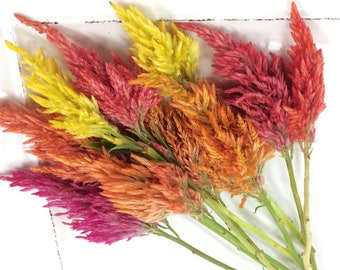 FRESH FIRE STICKS Bright Color Collection Fresh , Edible, Salads, Baking, Drink Toppers, Cupcake Toppers, Cake Decorations Edible Flower