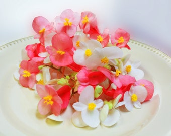 EDIBLE FLOWERS BEGONIAS: Vibrant pink and white petals with a bright yellow center matching stems. 50 Ct.