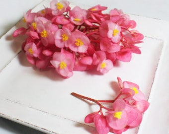 EDIBLE FLOWERS BEGONIAS: Vibrant pink petals with a bright yellow center & pink stems. 50 Ct.