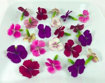EDIBLE FLOWERS DIANTHUS, Miniature Real Organic Flowers, Bulk, Magenta, Red, Pink  Salad Garnish, Drinks, Citrus Taste 200 Edible Flowers