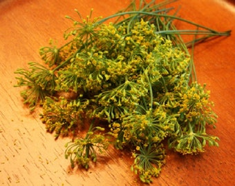 FRESH ORGANIC DILL Blossoms, Small heads Flower fragrant Branches Edible Decorative 25  restaurant supply overnight