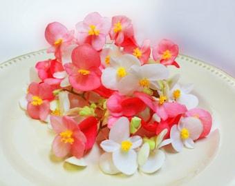 EDIBLE FLOWERS BEGONIAS, Fresh or Candied , Pink, Peach, Yellow, White, Cream, Flowers, Bulk, Cupcakes, Wedding Cakes, 50
