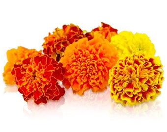 EDIBLE FLOWERS: MARIGOLDS, - Edible Flowers/ Full Blooms /Micro size Blooms Candied/ 25 Edible Flowers