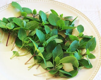 Fresh PETITE BASIL CINNAMON: deep green aromatic leaves, with cinnamon smell and flavor; Wonderful on desserts, entrees, overnight