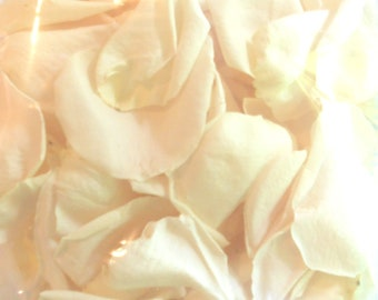 Scented WEDDING TOSS PETALS Ivory White Vanilla Cream Fresh Freeze Dried, Bio-degradable, Real Rose Petals, Wedding Color Match, Bulk Orders
