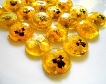 ORGANIC VIOLA SWEETENER, Edible Violas, Yellow, Cabochon, Champagne Glass, Buffet Dish, Organic Flower Candy, Weddings Favors, 16