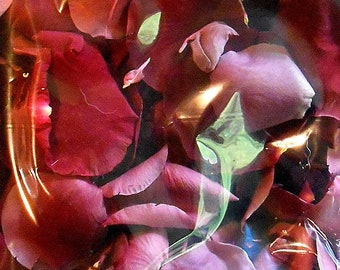 Scented WEDDING TOSS PETALS Burgundy Fresh Freeze Dried, Choice of Scent, Bio-degradable, Real Rose Petals, Weddings, 8 cups, Bulk Orders