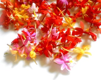 200 EDIBLE FLOWERS Miniature ORCHIDS, Fresh Tiny Orchids, Red, Pink, Orange, Yellow, Flowers, Bulk, Orchids, Wedding Cakes Edible Flowers,