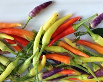 Edible Miniature Vegetables SWEET MICRO PEPPERS Colorful addition to soups and salads tacos 50 beauties overnight
