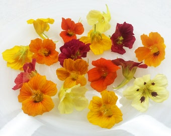 EDIBLE FLOWERS NASTURTIUMS,  Fresh or Candied , Red, Burgandy, Orange, Yellow, Flowers, Bulk, Salads, Wedding Cakes, Cupcake Toppers