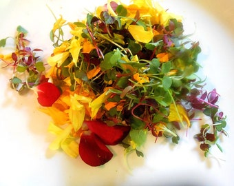 Fresh GOURMET SALAD GREENS Mix Shoots and Leaves, Micro Green Edible Flower Petals Large Container restaurant supply