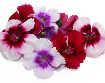 EDIBLE FLOWERS DIANTHUS, Miniature Real Organic Flowers, Bulk, Magenta, Red, Pink  Salad Garnish, Drinks, Citrus Taste 100 Edible Flowers
