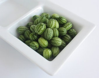 50 ORGANIC TINY CUCUMBERS Veggie Gems from the Organic Garden Salads Cassoroles overnight