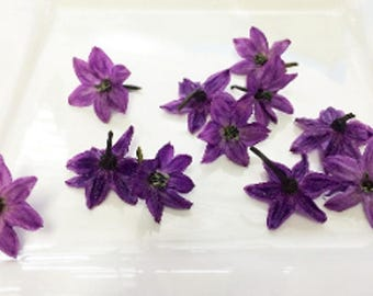 EDIBLE FLOWERS PURPLE Pepper Blossoms, Edible Deep Purple Flowers, Salads,Garnishes Hors d'oeuvre Toppers 100 Edible Flower