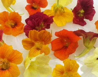 EDIBLE FLOWERS NASTURTIUMS, 75  Fresh , Red, Burgandy, Orange, Yellow, Flowers, Bulk, Salads, Wedding Cakes, Cupcake Toppers